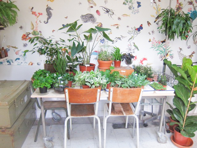 Mama Petula, le Concept store végétal